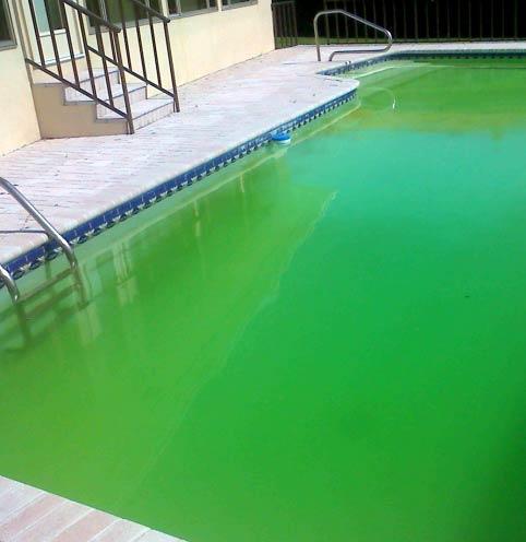 dotth2o it piscina-odore-cloro-ph-marche-alghe-batteri 002